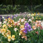 Цветочная клумба (1)