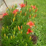 Цветочная клумба (3)