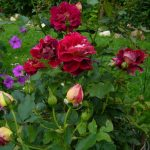Цветочная клумба (7)