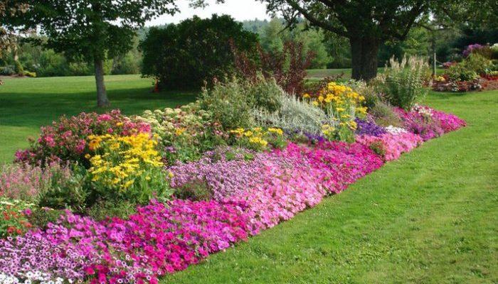 Популярные растения для сада