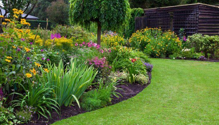 Новые модные растения для садов