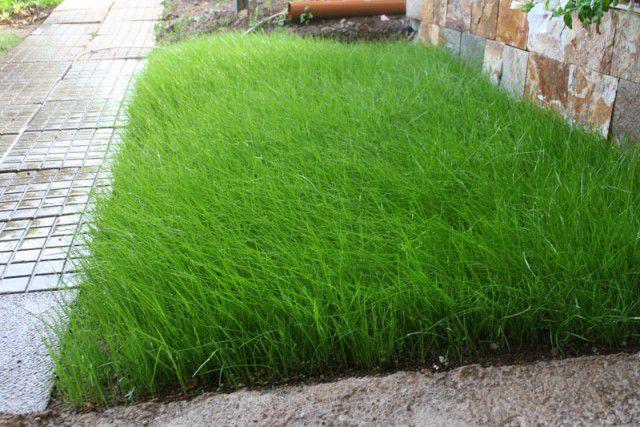 Какие травы использовать для газона